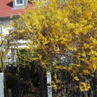 Tuesday Photo Challenge – Yellow
