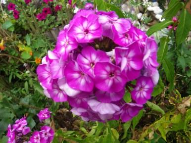 lovely flowers in our garden