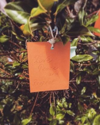 My Wish on the Wishing Tree