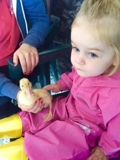 Duckling at Newgrange Farm