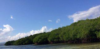 Mangrove Forest Nusa Lembongan Bali - 2