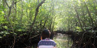 Mangrove Forest Nusa Lembongan Bali - 4