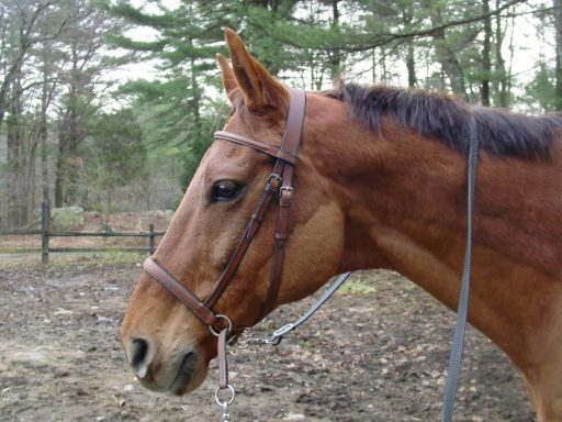 what is a bitless bridle called