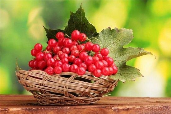 Косточки калины полезные свойства и противопоказания. Лечебные свойства семян калины красной и противопоказания
