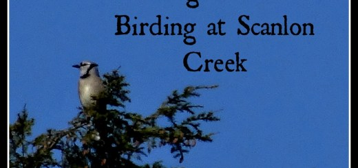 Learning the Art of Birding at Scanlon Creek