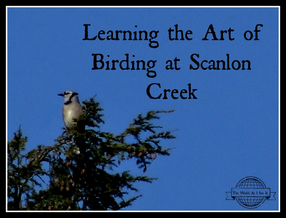 Scanlon Creek birding