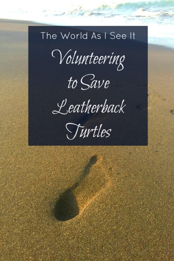 Volunteering to Save Leatherback Turtles