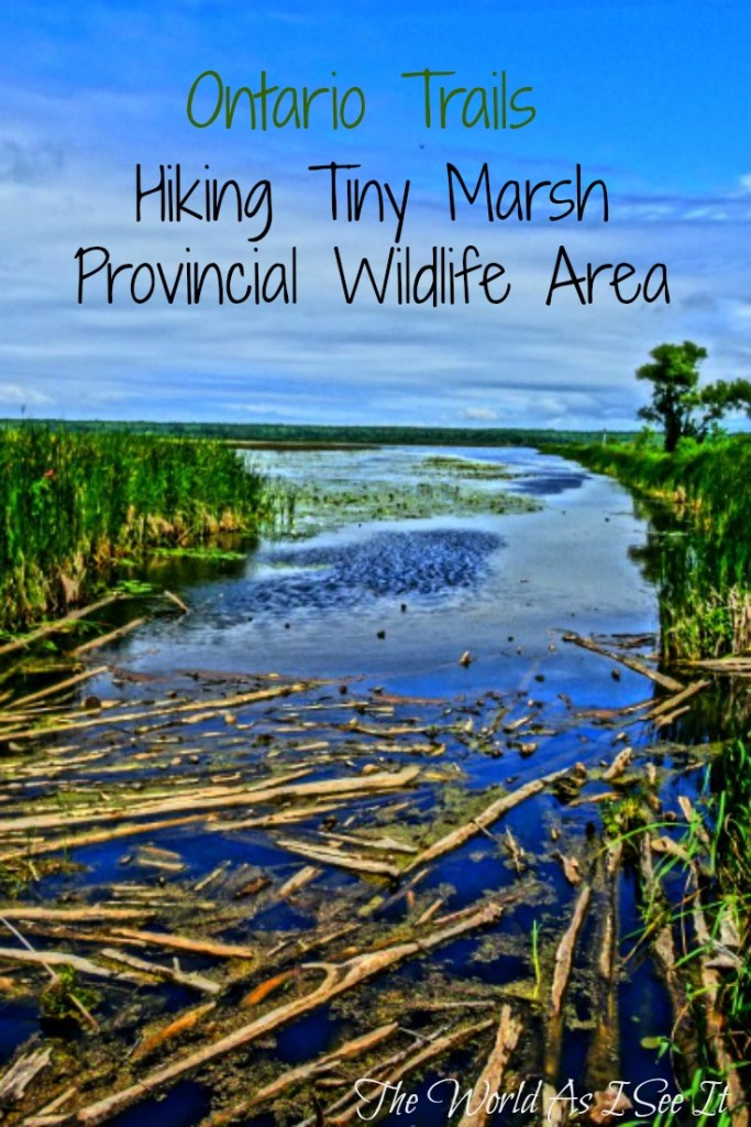 Hiking Tiny Marsh Provincial Wildlife Area