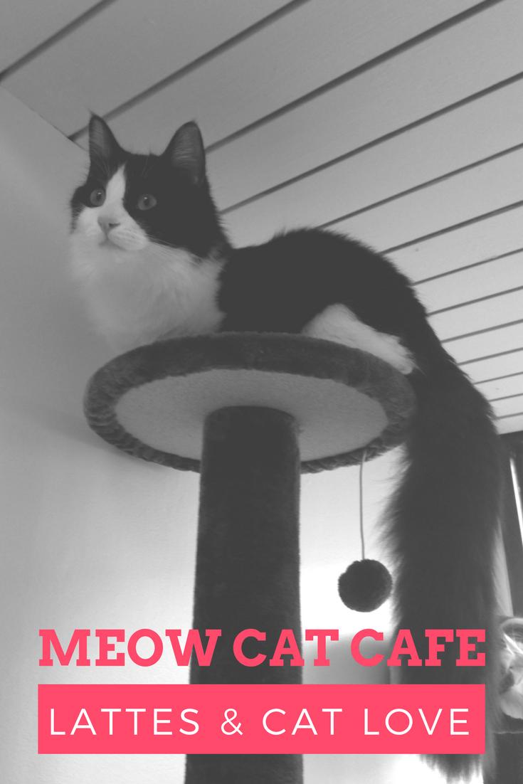 nyc feral cat initiative