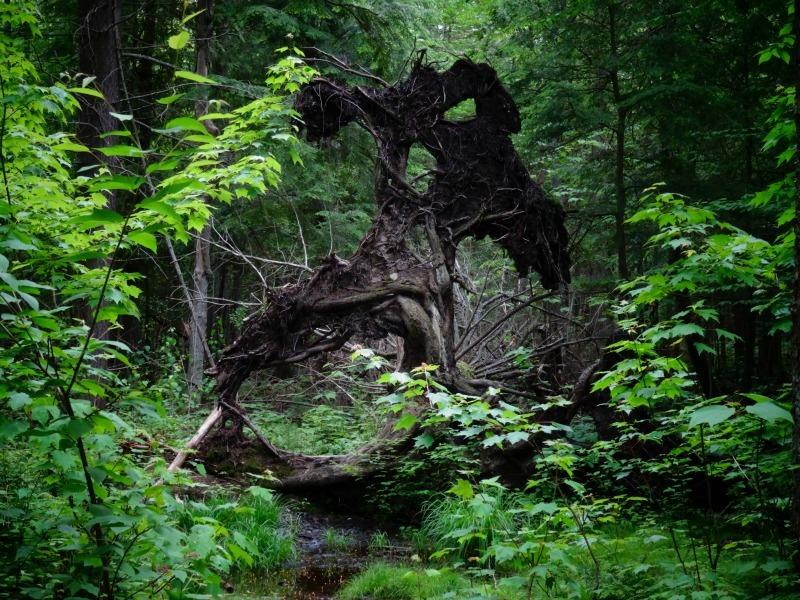 Granite Ridge Trail tree