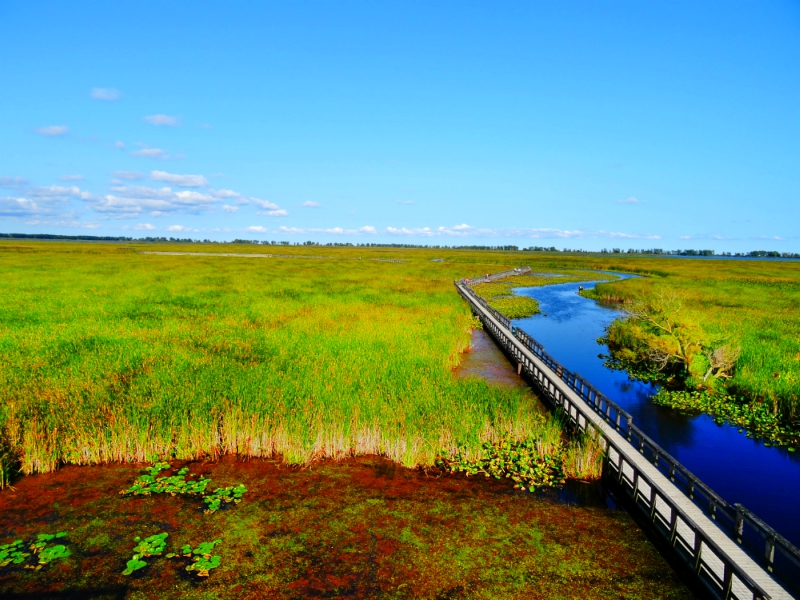 Point Pelee National Park marsh boardwalk