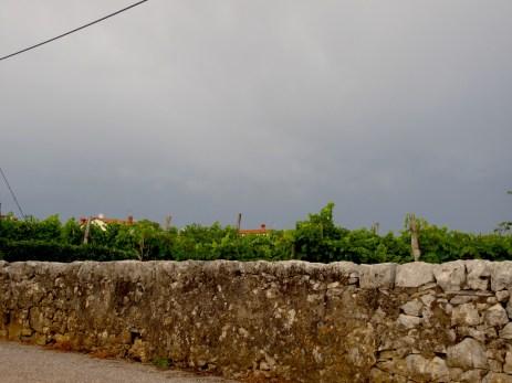 Stony walls and vineyards in Pliskovica.