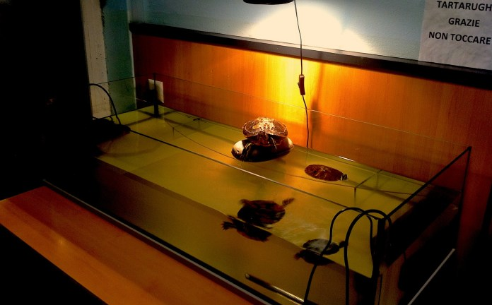 The aquarium with turtles in the strange bar in Locarno. Atmosphere - back straight into early 90s.