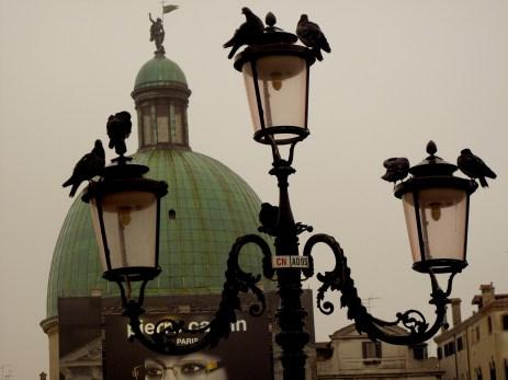 Venetian pigeons
