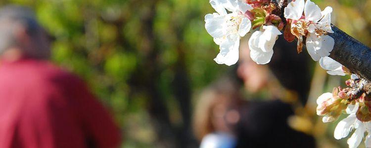 Flor de cerezo en primer plano. Detrás yo y el payés