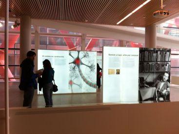 Exposición del Museo de la evolución humana
