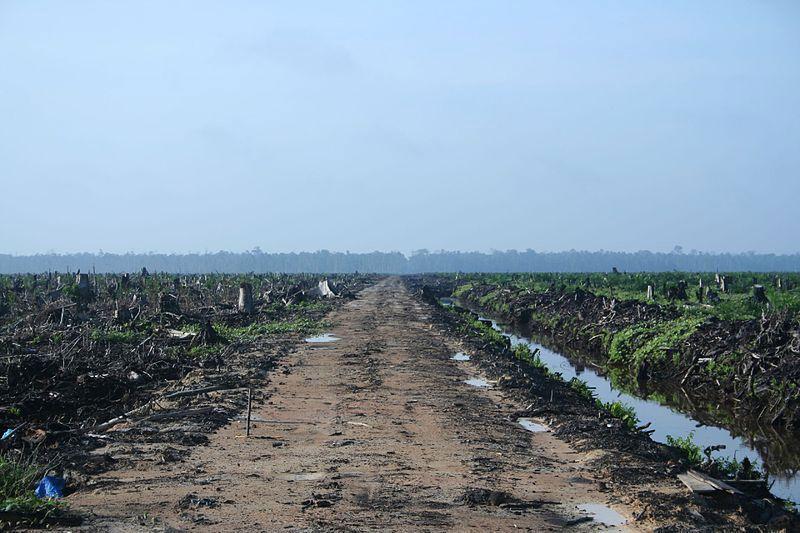 aceite palma deforestacion Riau, Sumatra