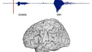 Video: Logran seguir el movimiento de un pensamiento a través del cerebro (y explica por qué hablamos antes de pensar