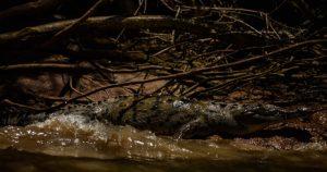Video: Mujer es atacada por un cocodrilo en Tampico
