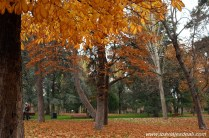 foto otoño 4