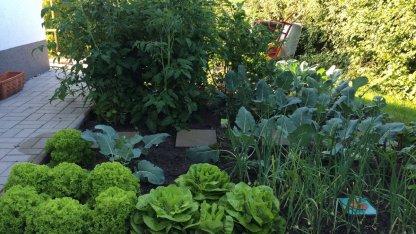 Blick aufs Gemüsebeet: Wir staunten nicht schlecht, wie prächtig sich alles trotz unserer Abwesenheit entwickelt hat.