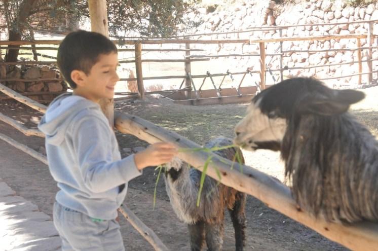 viajar-a-cusco-en-familia-guia-datos-14
