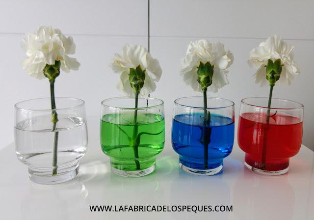 Experimento con plantas agua y colorante alimentario