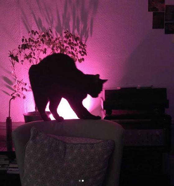Mon-chat-noir-Calin