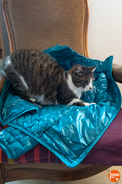 patagonia-micropuff-jacket-review-cat