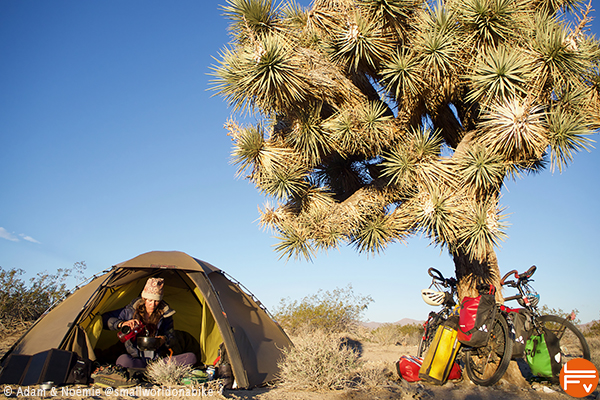 a tent, a bike near a giant yucca, Joshua tree nat parc