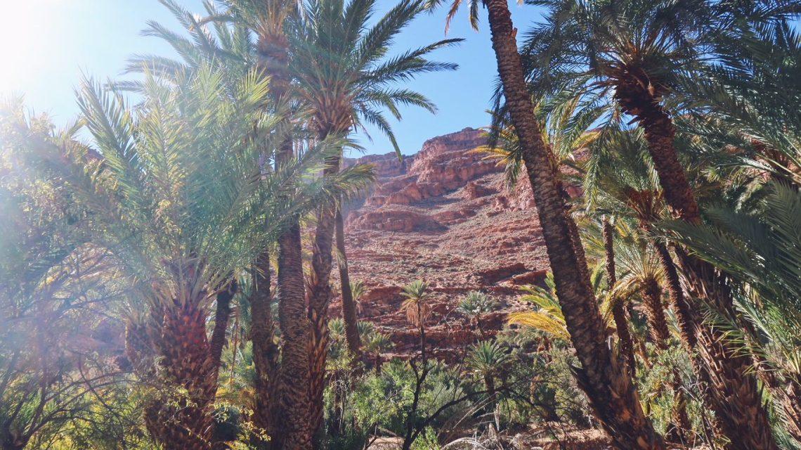Voyage au Maroc palmiers aux gorges d'ait mansour