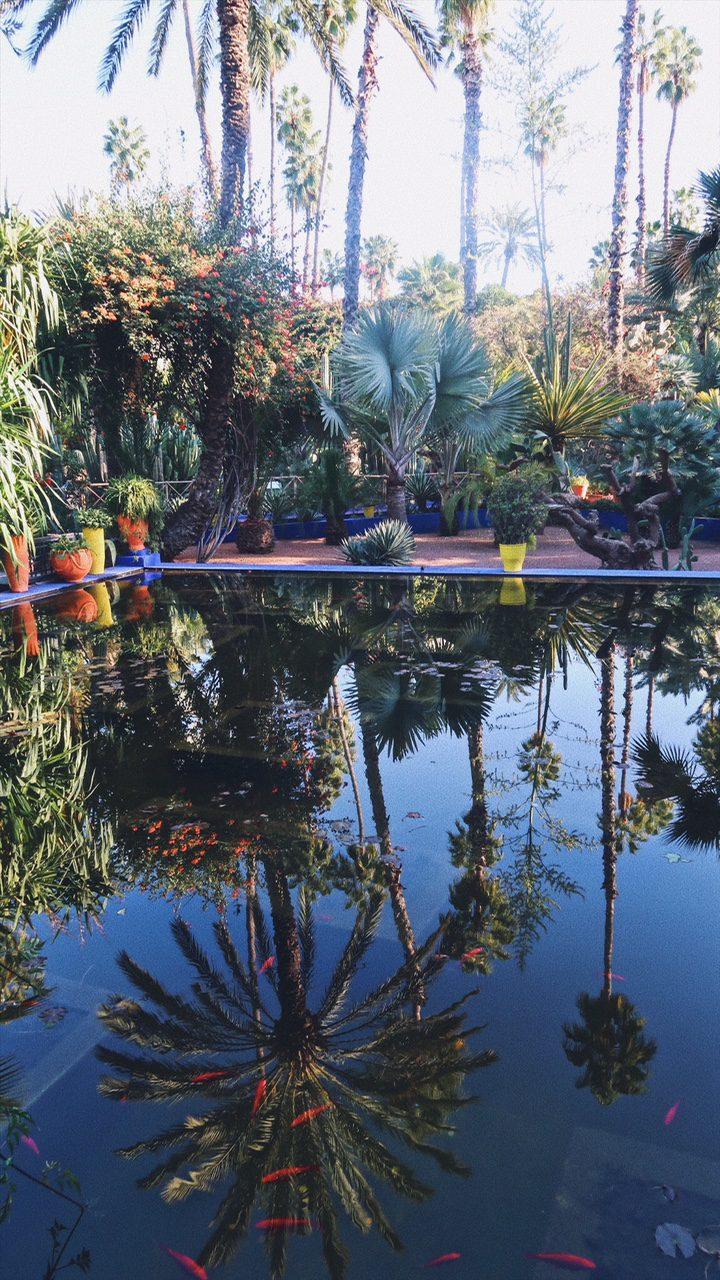 Voyage au Maroc Marrakech reflets sur la piscine dans le jardin majorelle