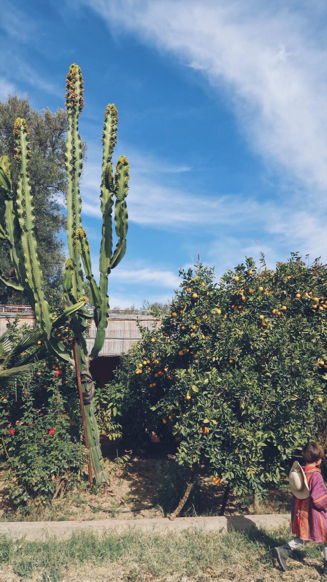 Voyage au Maroc Taroudant camping du jardin