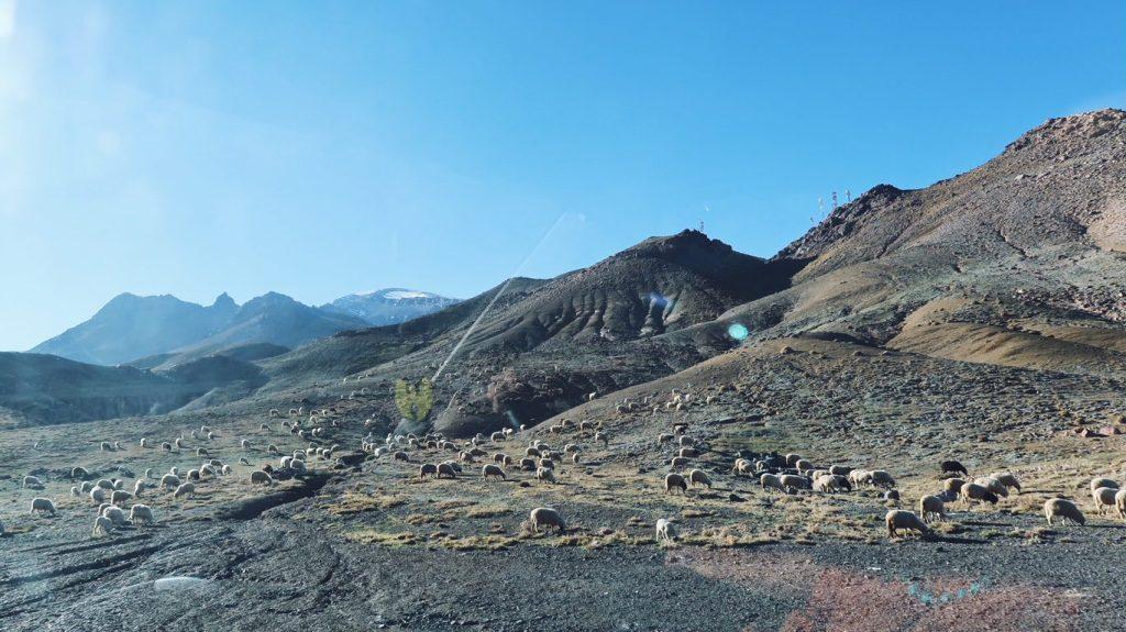 Voyage au Maroc Tizi n'Tichka moutons