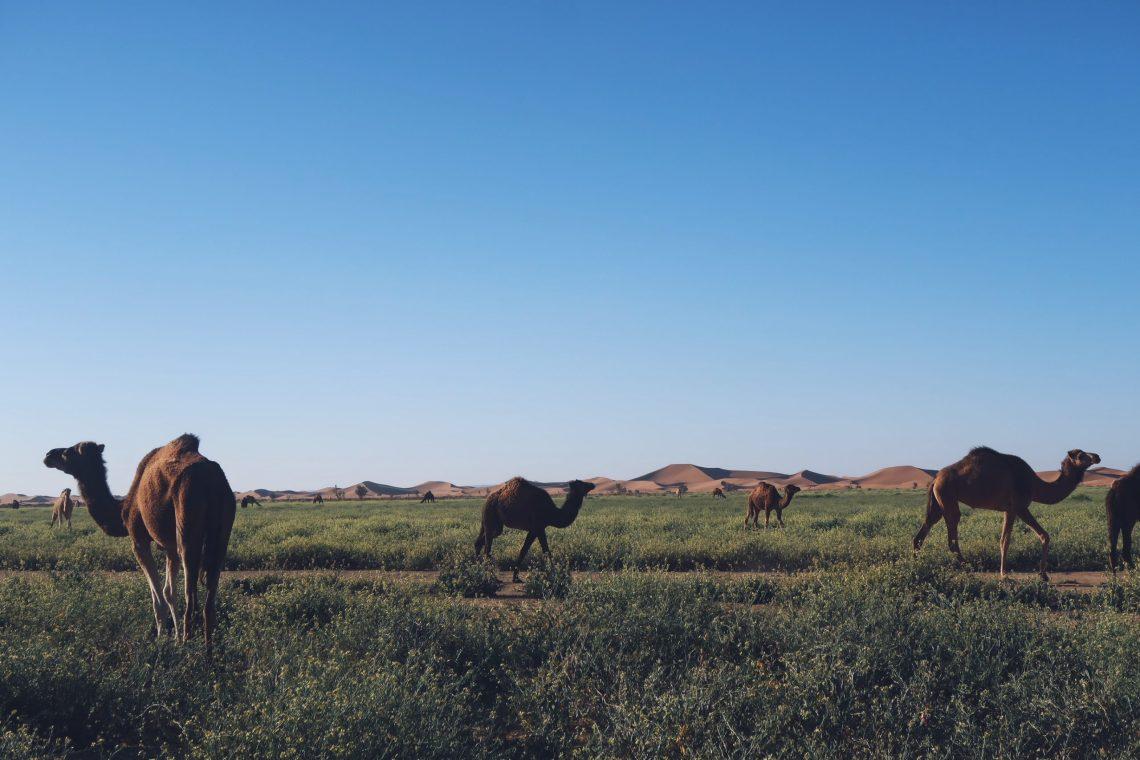 Voyage au Maroc Desert Sahara Erg Chegaga excursion 4x4 dromadaires