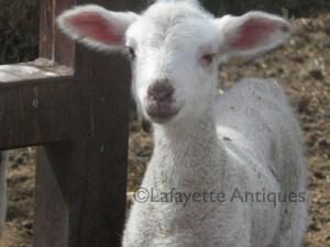 lamb3
