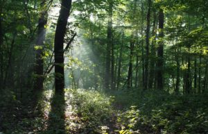 Komorebi: Light coming though the trees