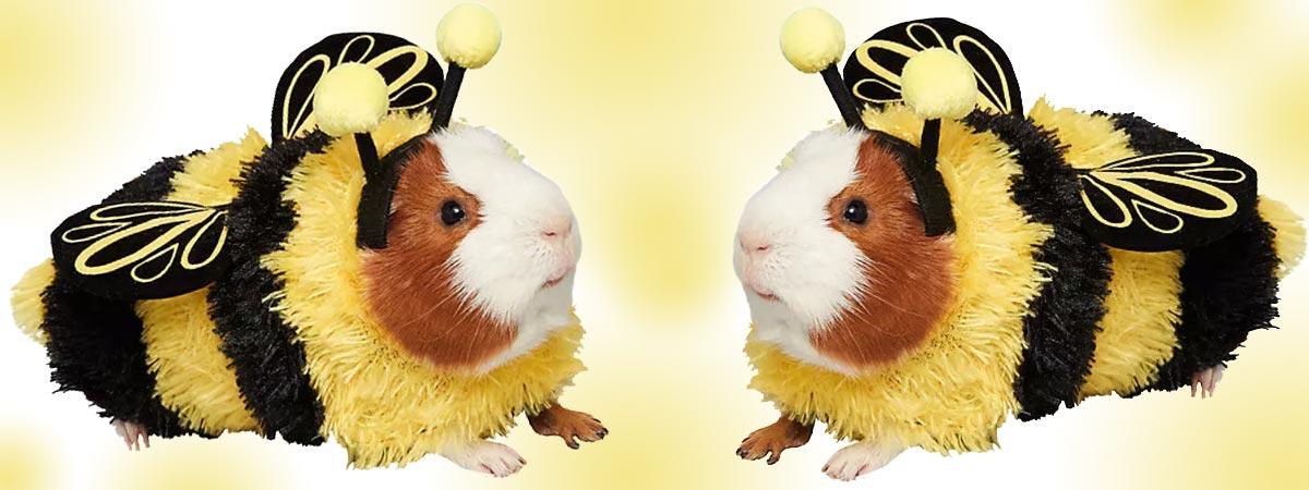 Rabbit Costumes Guinea Pigs