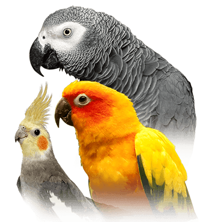 parrot personality food care