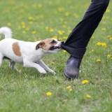 Attention à vos chiens lors du passage du facteur