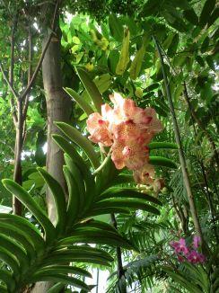Mille et Une Orchidées 2016 © Lovely Rita