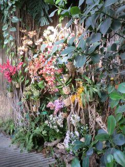 Présentation d'orchidées par Vacherot & Lecoufle