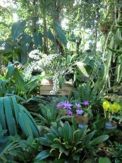 Des orchidées sous la Grande Serre du Jardin des Plantes