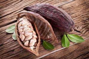 Fèves de cacao dans leur gousse
