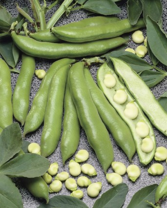 Gourganes (Broad/fava beans)
