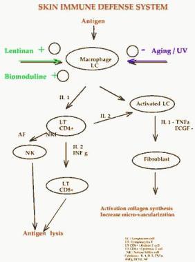 Šematski prikaz reakcija imunog sistema kože na agresiju spolja( UV zraci, virus, bakterija)