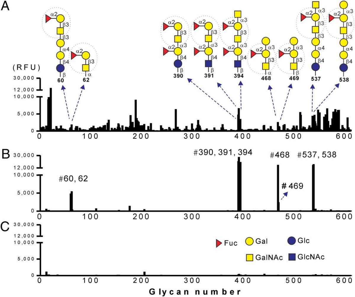 Mehanizam uticaja polisaharida iz Reishi gljive na imunitet i kancerogene ćelije