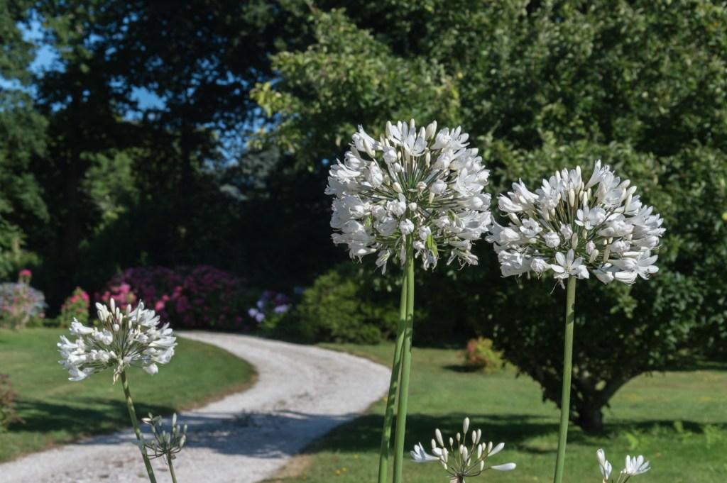Nos gites se situent à la Foret Fouesnant dans un parc arboré, vous y trouverez Hortensias, Camélias, Rhodos et de grands chênes