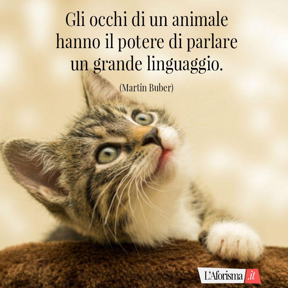 Gli occhi di un animale hanno il potere di parlare un grande linguaggio. (Martin Buber)
