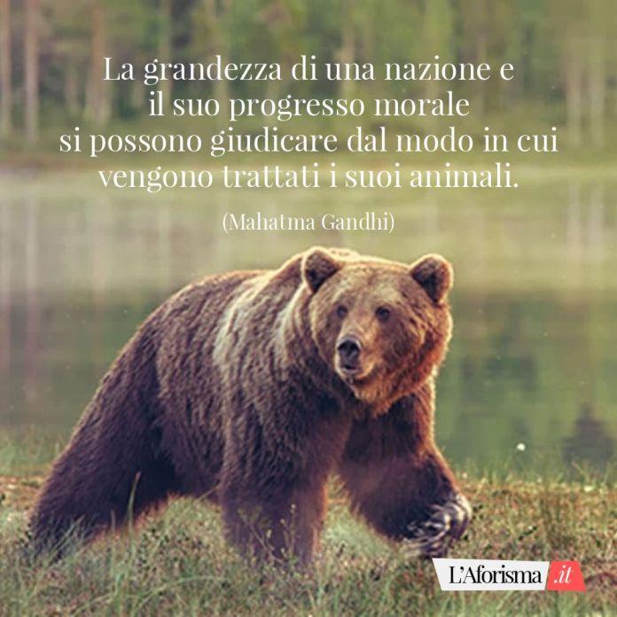 La grandezza di una nazione e il suo progresso morale si possono giudicare dal modo in cui vengono trattati i suoi animali. (Mahatma Gandhi)